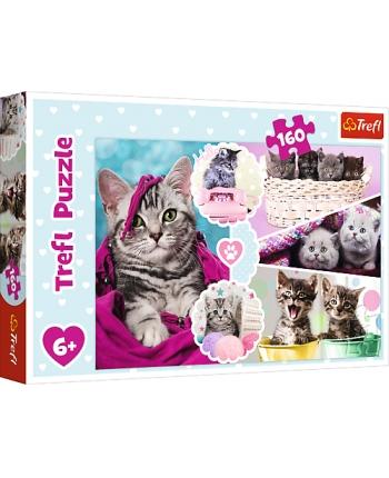 Puzzle 160 Mačiatka