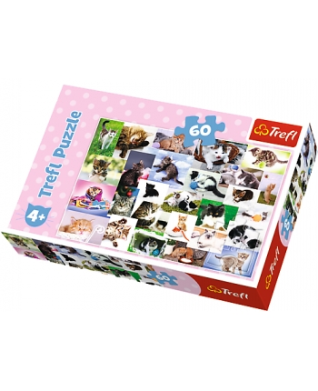 Puzzle 60 Mačky