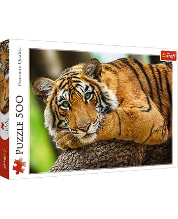 Puzzle 500 Tiger