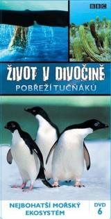 Obrázok - Život v divočine: Pobrežie tučniakov